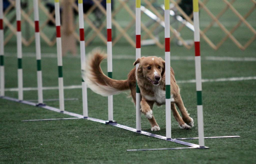 toller weave polls agility
