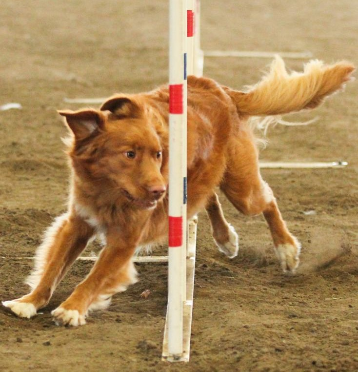 toller agility weave